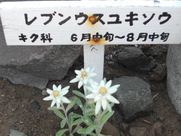 【礼文島】礼文島に咲く花観光案内です。