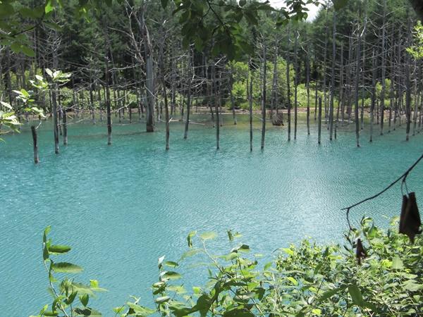 【旭川空港発】美瑛町青い池とパッチワークの路・富良野観光コースです。