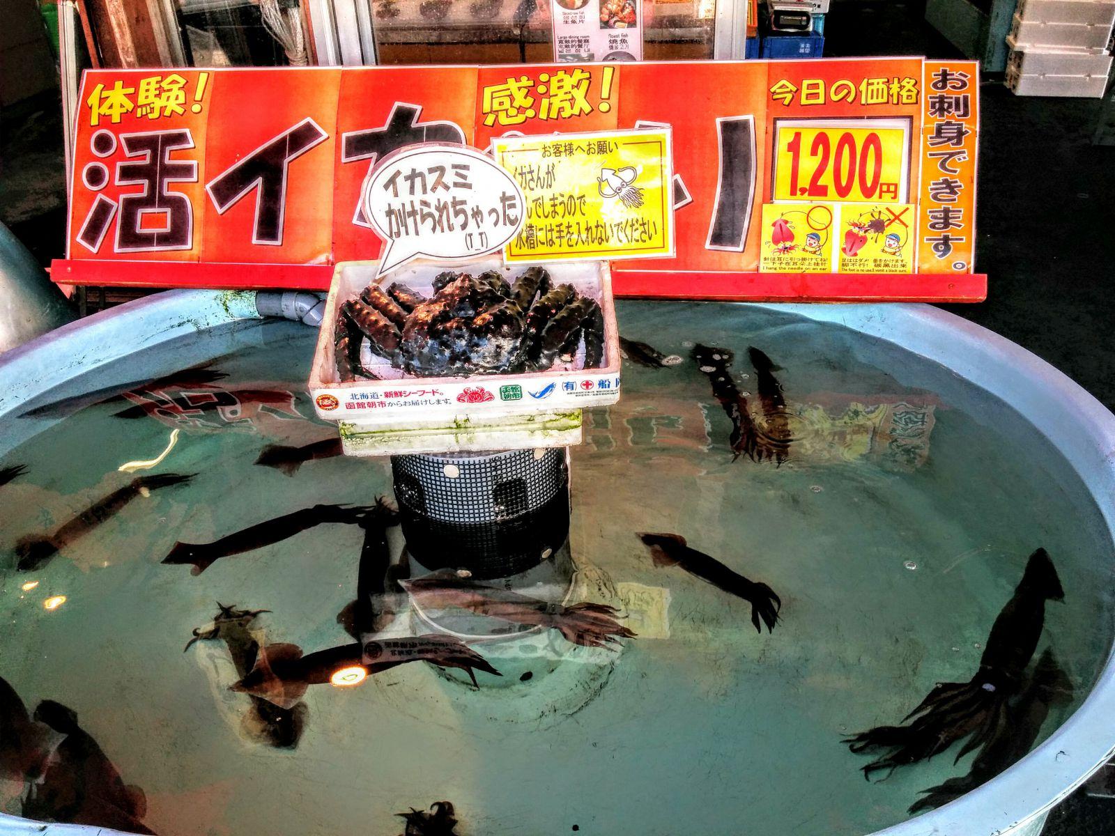 【函館】函館朝市活イカ釣り観光グルメ案内です。