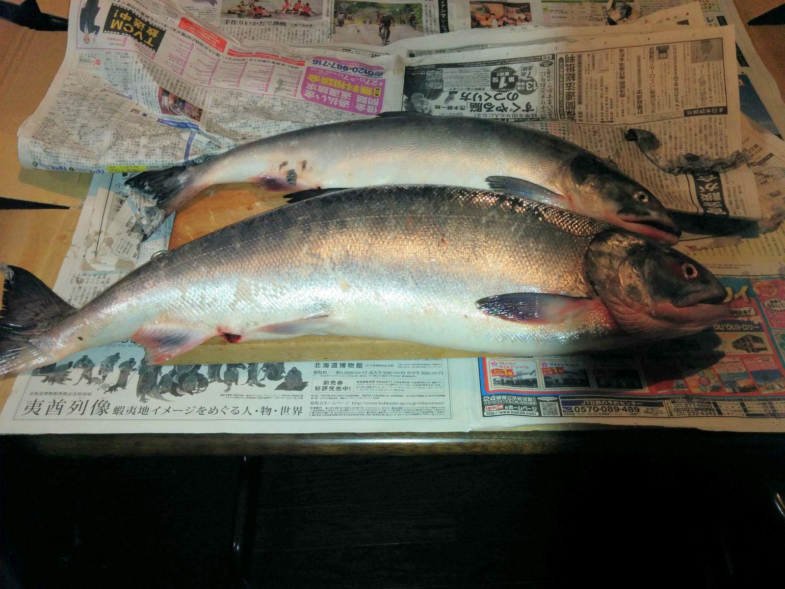 【北海道】北海道の鮭(サケ)観光案内です。