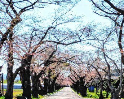 【北斗市】松前藩戸切地陣屋跡観光案内です。