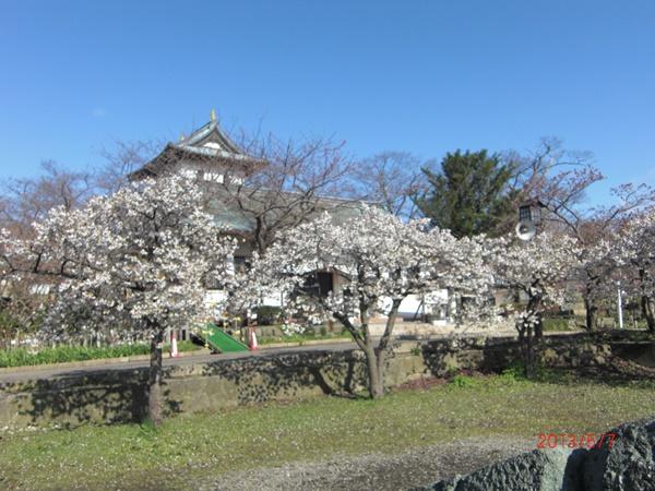 【松前町】松前町の桜観光案内です。