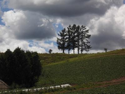 【富良野・美瑛】上富良野町JALのCMで登場した・嵐の木観光案内です。