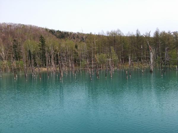 【美瑛町】青い池観光案内です。