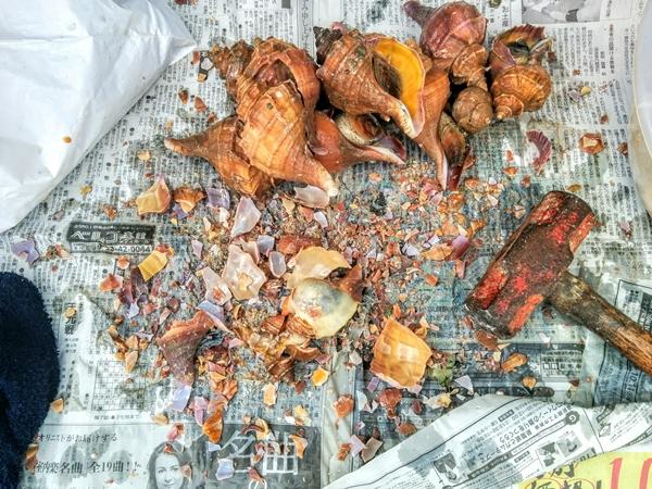 小樽自宅に届いた襟裳産活つぶ貝の殻むきです。