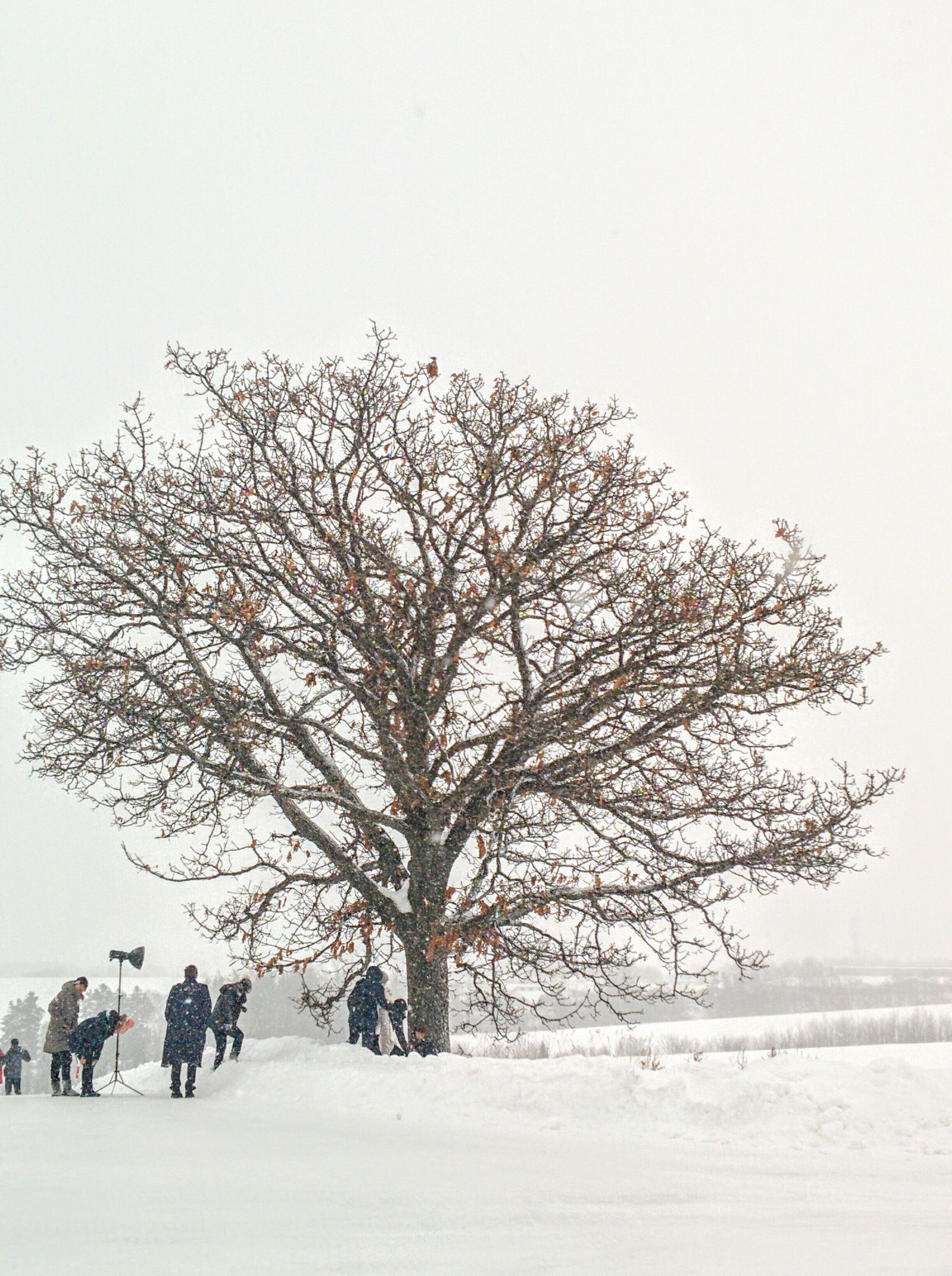 美瑛町冬のセブンスターの木観光タクシーです。