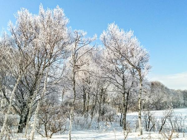 【千歳】千歳空港近くの樹雪風景写真です。
