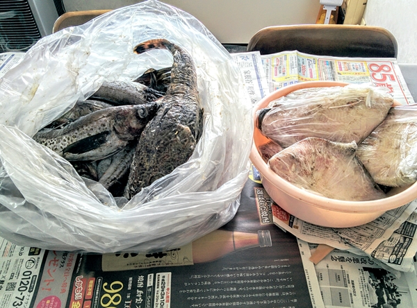 【小樽】襟裳の漁師の友人から大量の魚が送られて来ました。