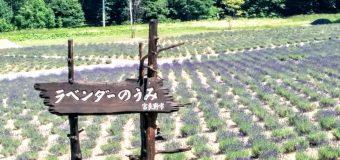 【富良野】ハイランド富良野ラベンダーの森開花情報で~す。