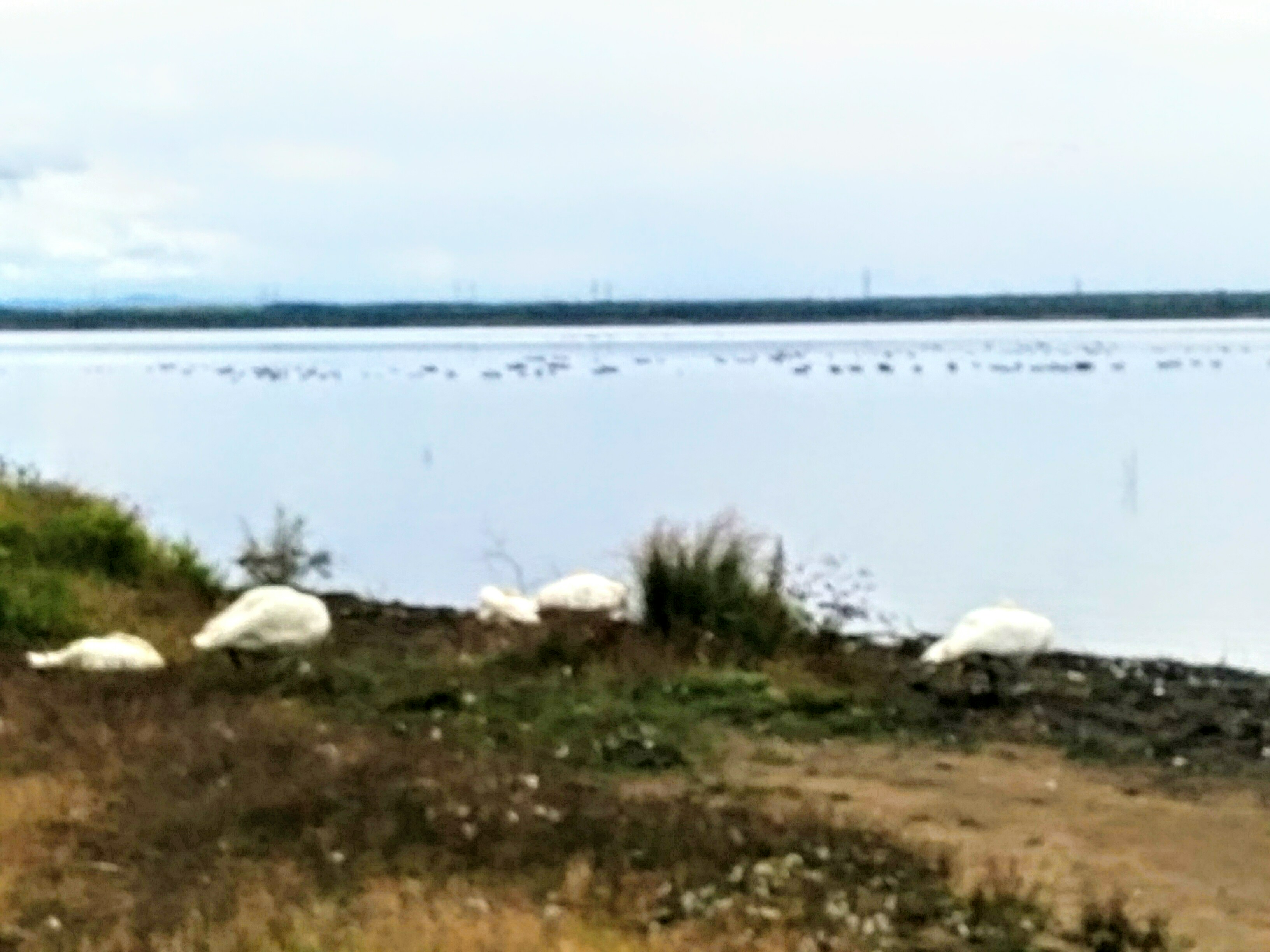 【苫小牧】ウトナイ湖周辺観光案内です。