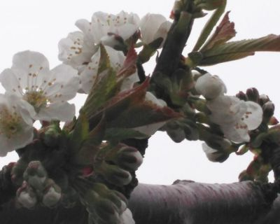 【小樽】我が家にも遅い春がやって来ました。