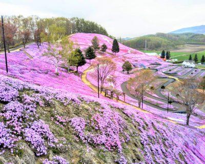 【東藻琴】ひがしもこと芝桜公園観光案内です。