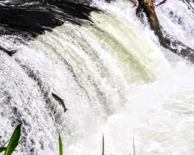 【清里町】さくらの滝観光案内です。