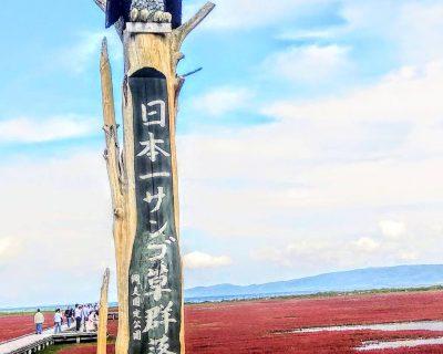 【能取湖】卯原内・日本一サンゴ草群落地観光案内です。